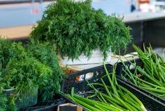 Укроп и петрушка сочной весны свежий зеленый Стоковые Изображения