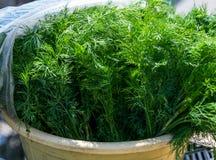 Укроп и петрушка сочной весны свежий зеленый Стоковое фото RF