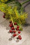 Укроп цветорасположения и красное дерево птиц-вишни Стоковое фото RF