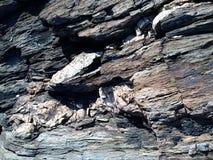 Укротите зверя Стоковая Фотография RF