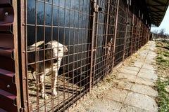 Укрытие собаки - надежда - животная жестокость Стоковые Фотографии RF