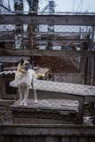 Укрытие собаки собаки Стоковая Фотография