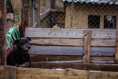 Укрытие собаки собаки Стоковое Изображение