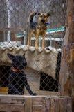 Укрытие собаки собаки Стоковые Изображения