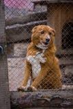 Укрытие собаки собаки Стоковые Изображения RF
