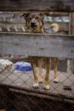 Укрытие собаки собаки Стоковое Фото