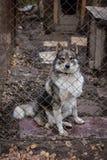 Укрытие собаки собаки Стоковые Фото
