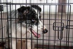 Укрытие для собак Стоковое фото RF