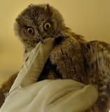 Укус Owlet неистово перчатка стоковые фото