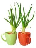 лук изолированный зеленым цветом Стоковая Фотография