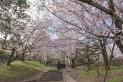 Уклон с вишневыми цветами Сакуры, Киото Keage, Япония стоковые изображения rf