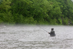 улавливает семг реки рыболова Стоковая Фотография RF