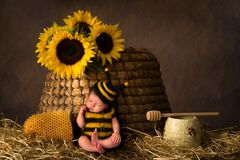 Улей и младенец в обмундировании пчелы стоковые фото
