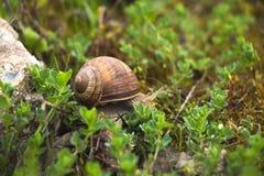 Улитка в траве стоковая фотография rf