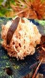 Улитка на грибе стоковые изображения rf