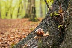 Улитка на дереве в лесе стоковая фотография rf