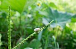 Улитка на зеленой траве стоковое изображение rf