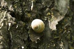 Улитка на коре дерева стоковые изображения