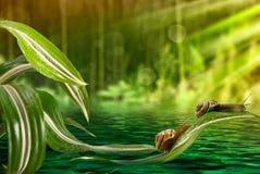 Улитка на листьях над водой Стоковое Изображение