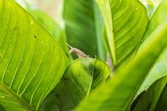 Улитка на листьях Повредите к саду и создайте грязь стоковые изображения rf