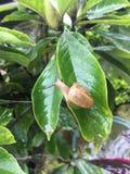 Улитка на листьях стоковое изображение