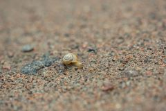 Улитка на песке стоковая фотография