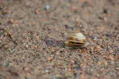 Улитка на песке стоковая фотография rf