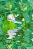 Улитка сада на листве стоковые фото