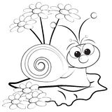улитка страницы маргаритки расцветки Стоковая Фотография RF
