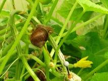 Улитка с раковиной в песке на зеленых стержнях Стоковые Фото