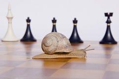 улитка chessmans chessboard Стоковые Фотографии RF