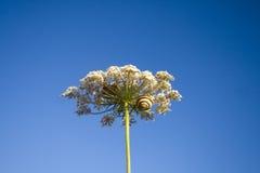 улитки ветви Стоковое Фото