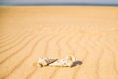 Улитки на песчаном пляже Стоковое Изображение RF