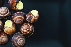 Улитки на темной плите Французское блюдо Стоковые Изображения