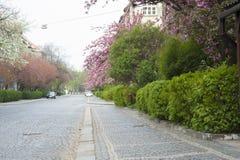 Улица города весны в цветени Стоковые Изображения RF