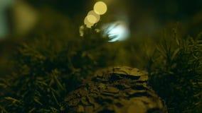 Улица города ночи с влиянием bokeh видеоматериал