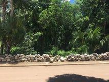 Улица джунглей стоковые фотографии rf