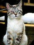 улица кота Стоковая Фотография