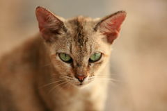 улица кота Стоковое Изображение