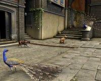 улица павлинов котов среднеземноморская Стоковые Фотографии RF