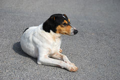 улица портрета собаки Стоковые Изображения RF