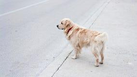 улица семьи собаки Стоковая Фотография RF