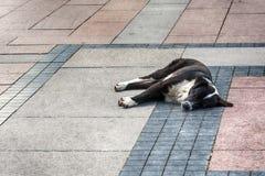 улица спать собаки Стоковые Фото