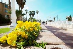 Улица с желтыми цветками в центре Нагарии, Израиля Стоковая Фотография