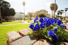 Улица с цветками в центре Нагарии, Израиля Стоковое фото RF