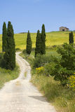 улица Тоскана кипариса сельской местности отклоняющийся от прямого пути Стоковое Изображение