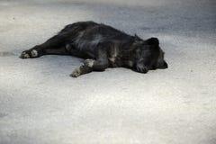 улица черной собаки Стоковое Фото