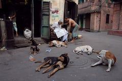 улица kolkata собаки Стоковая Фотография