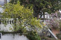 улица san lombard california francisco Стоковое Фото