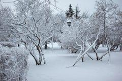 Уличный фонарь в парке снега Стоковые Изображения RF